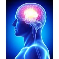 Beyin Performansını Artırın