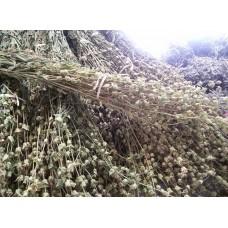 Dağ Çayı - Sideritis