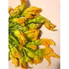 Kabak Çiçeği  10 adet - TÜKENDİ